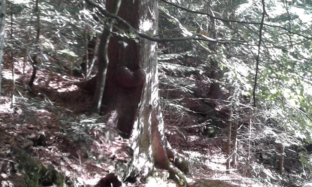 001_csod-trilobit-7a-2017_m
